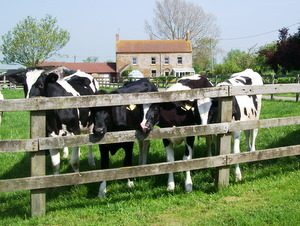Self Catering in Somerset